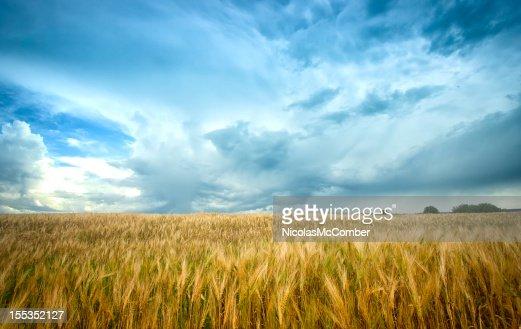 Gerste Feld unter Aufgeregte sky