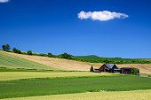 Scenic view of Barley Field with cottage in Biei province, Hokkaido, Japan