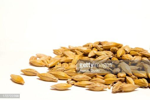Grain-Gerste
