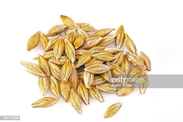 Barley grains on a white background