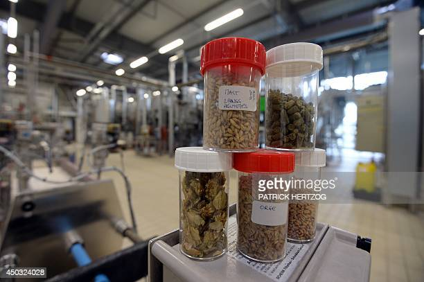 Barley hops and malt seeds are pictured on May 28 2014 at the Research and Development Centre of Kronenbourg main brewery in Obernai eastern France...