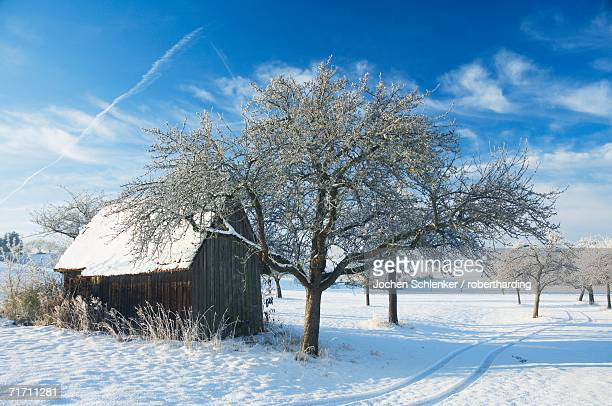 Barn and apple trees in winter, Weigheim, Baden-Wurttemberg, Germany, Europe