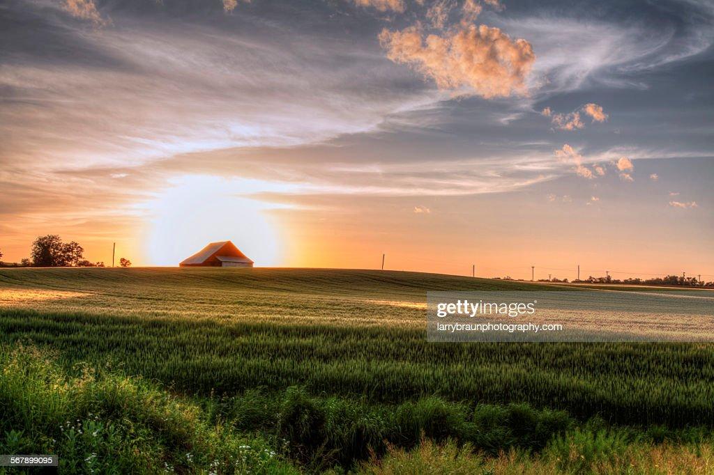 Barn in a Wheatfield