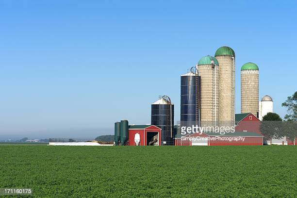 Barn with Multiple Silo's
