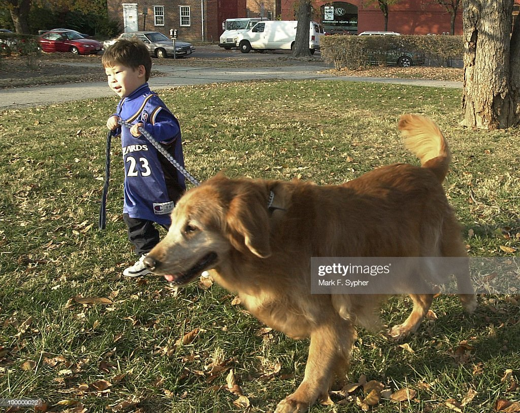 Barney, the family's golden retriever, is taken for a walk in the park by Tema.