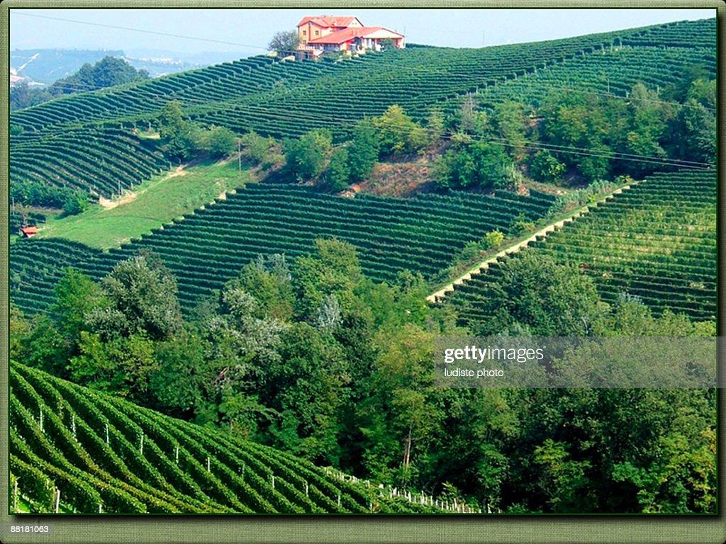 Barolo vineyard