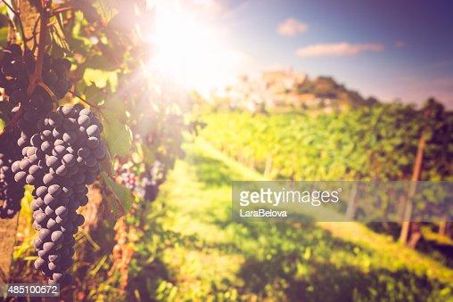 バローのブドウ園
