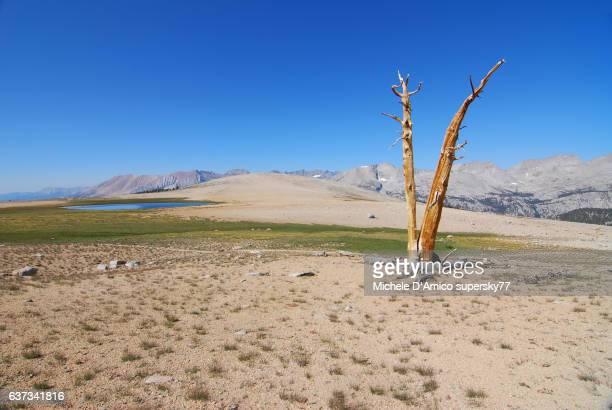 Barren high altitude landscape with tree stump