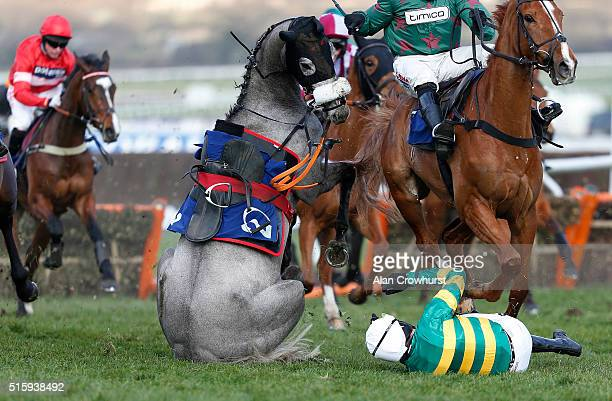 Barry Geraghty falls from Campeador at the last in The Fred Winter Juvenile Handicap Hurdle Race before both getting up unhurt at Cheltenham...