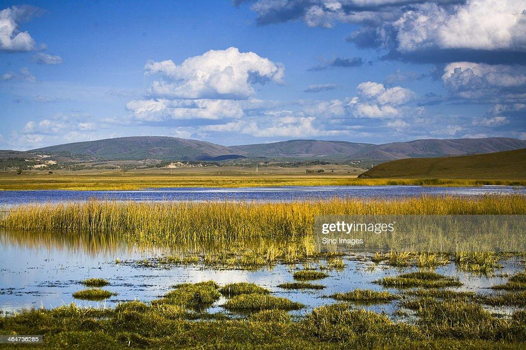 Bashang wetland