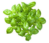 Basil isolated on white background. Top view
