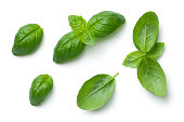Basil leaves with water drops isolated on white background. Top view
