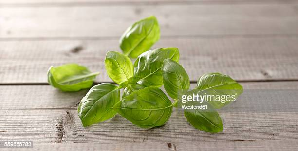 Basil leaves on wood
