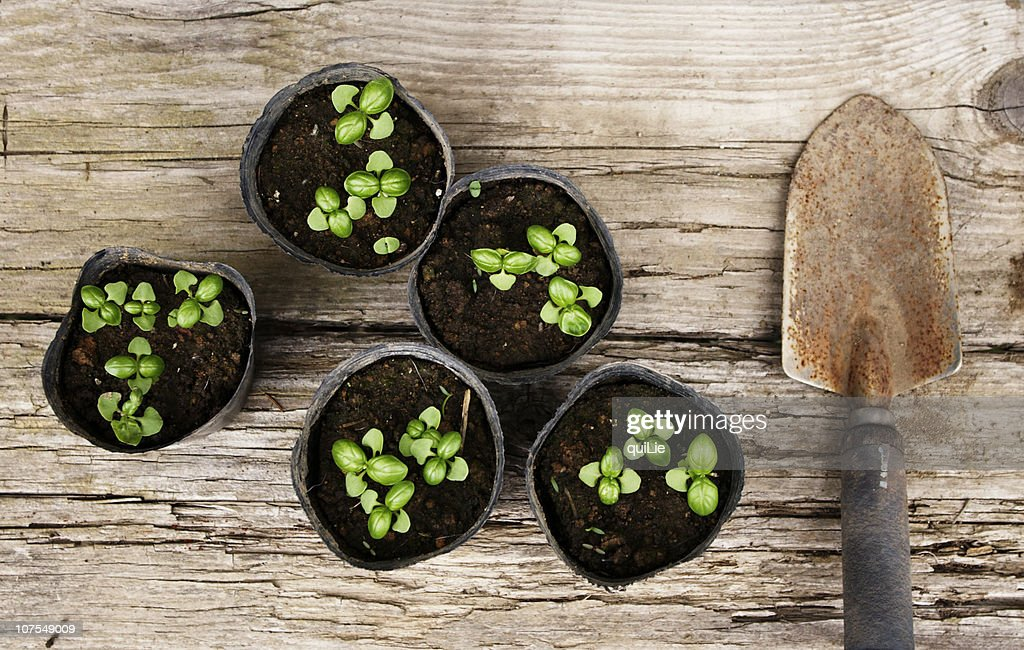 Basil pots and a trowel
