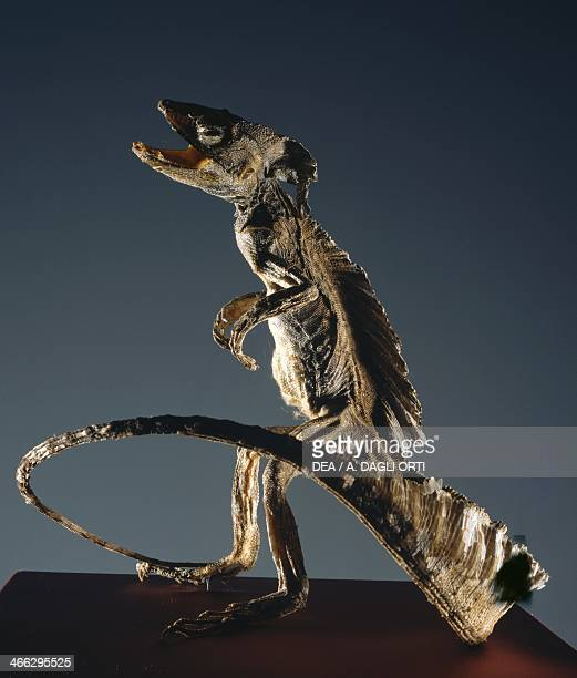 Basilisk king of the serpents laid by a sevenyearold rooster and hatched by a toad it was believed that it could kill with a gaze Supernatural