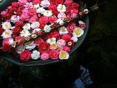 Basin of Camellia