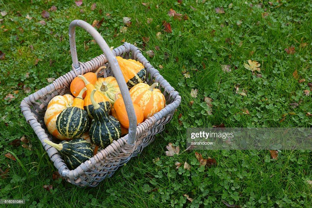 Basket full of attractive ornamental squash : Foto de stock