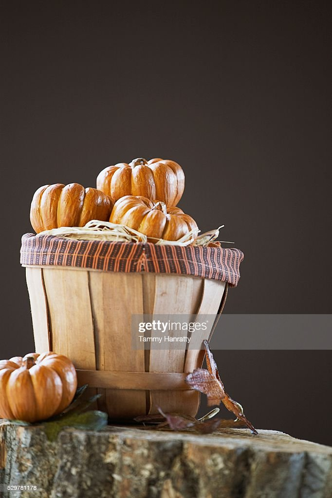 Basket Full of Miniature Pumpkins : Stock Photo