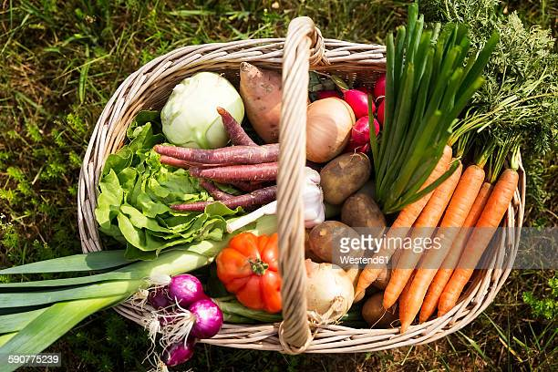 Basket full of organic vegetables