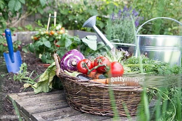 Basket full of organic vegetables