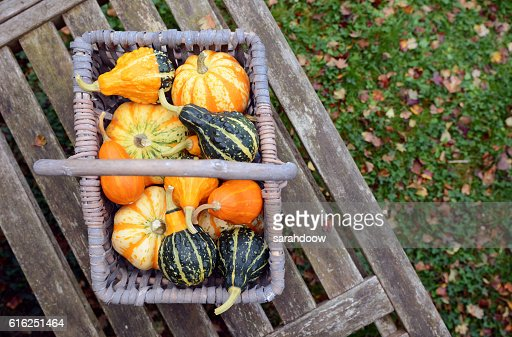 Basket full of small ornamental pumpkins on a bench : Foto de stock