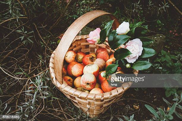 basket of apples and flowers