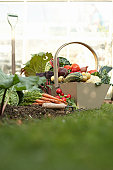 Basket of assorted vegetables in field