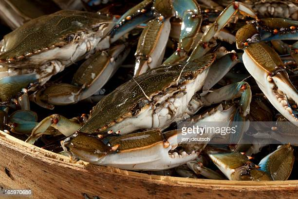 Basket of Blue Claws