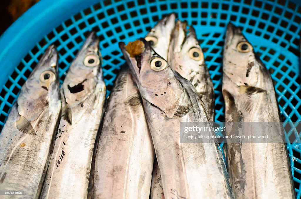 Basket of fish : Stock Photo