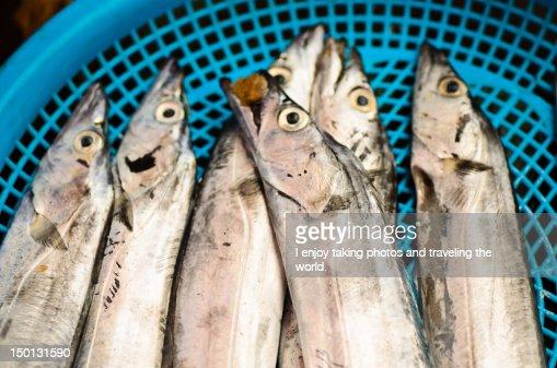 Basket of fish : Stock Photo
