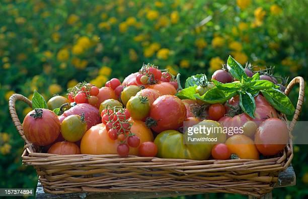Basket of Homegrown Summer Produce, Heirloom Tomatoes Vegetable Harvest
