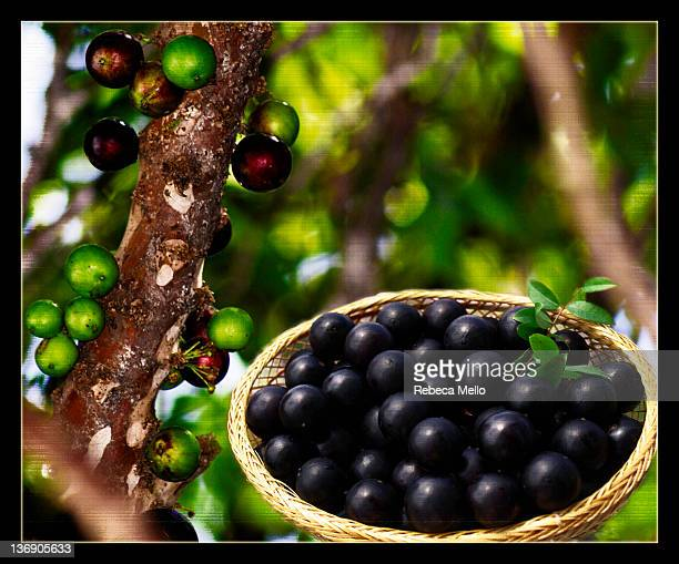 Basket of Jabuticaba