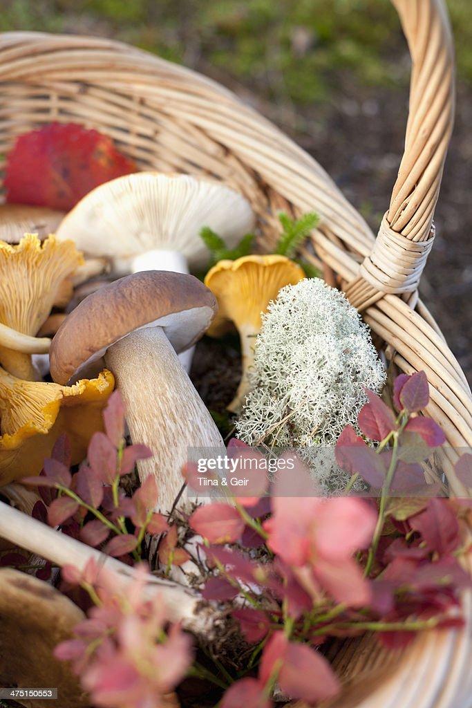 Basket of mushrooms and autumnal leaves