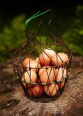 Basket of organic eggs in garden.