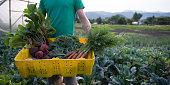 A basket of organic produce on the farm.