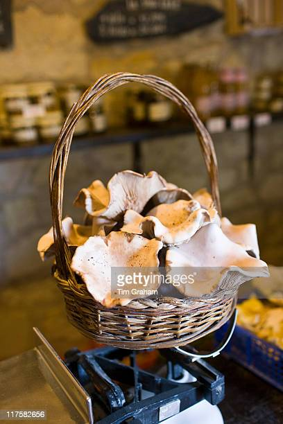 Basket of Pied Blue mushrooms grown in former troglodyte cave at Le Saut aux Loups in the Loire Valley France