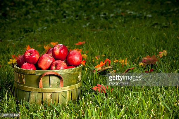 Basket of red apples in the grass