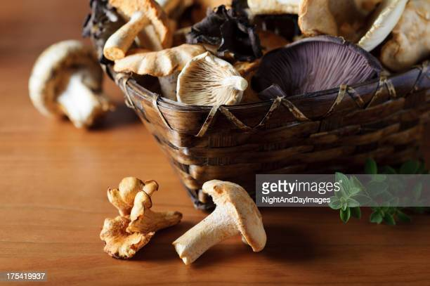 Basket of Wild Mushrooms