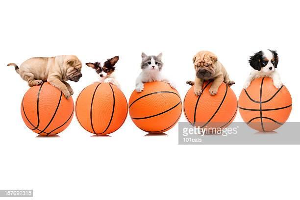 Équipe de basket-ball