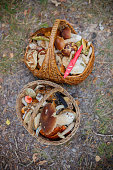 Two wicker baskets full of various kinds of mushrooms in a forest