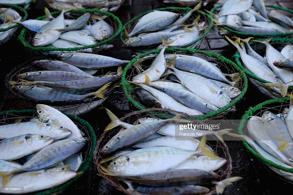 Baskets of fish are displayed at the Deira Fish Market on April 29, 2014 in Dubai, United Arab Emirates.