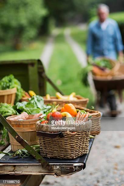 Panier de légumes récoltés dans le jardin.
