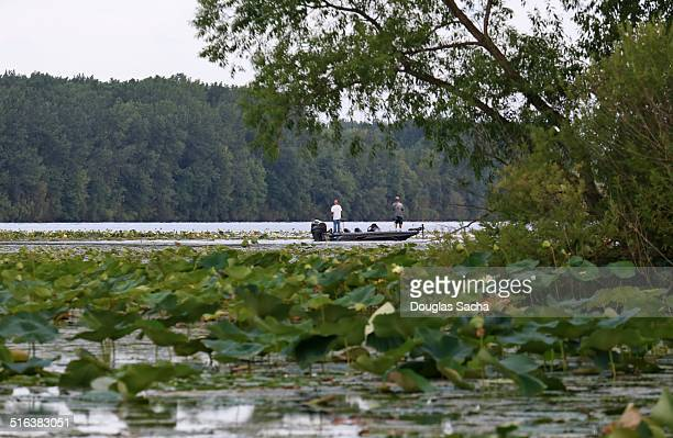 Bass boat in action