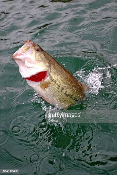 bass fishing 00