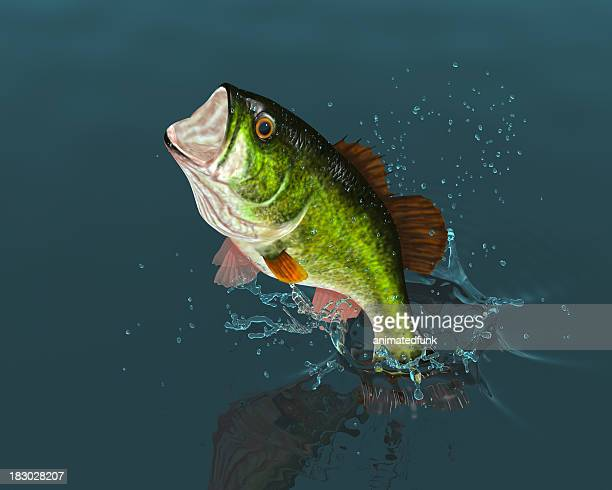 Bass Leaping