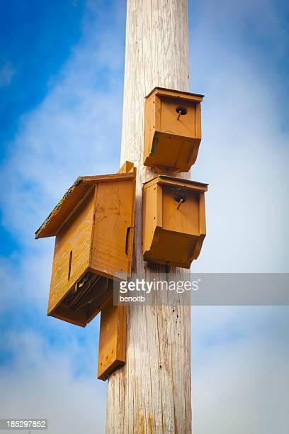 Bat and Bird Houses