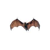 Bat flying isolated on white background