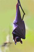 Bat nature behavior