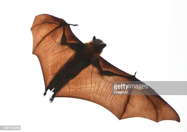 El Bat