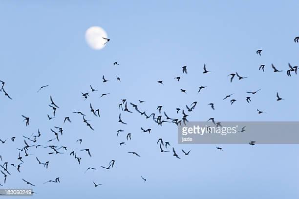 Bat enjambre